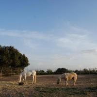 Caballos cerca de la Casa Rural